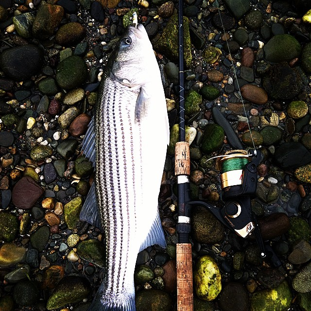 Top Striped Bass Techniques for Inshore Fishing