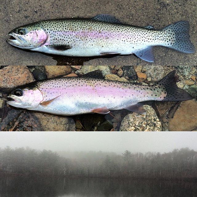 how to catch trout in new england ponds